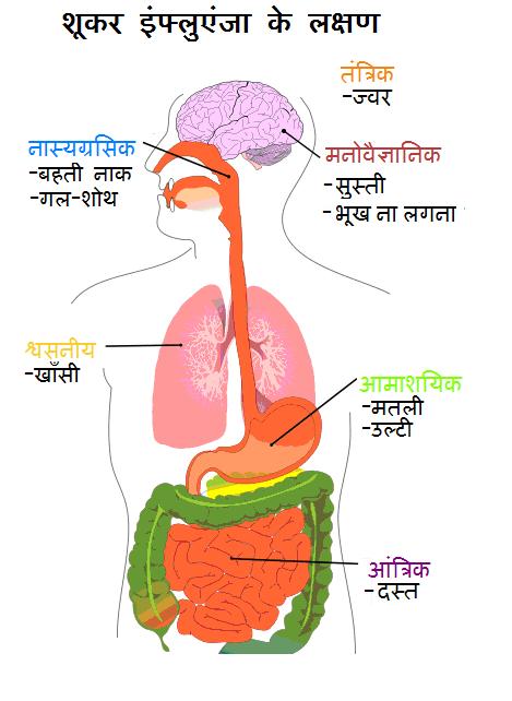 Diagram_of_swine_flu_symptoms_HN